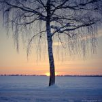 frozen light by detail24