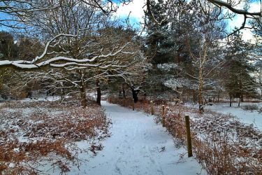 Snowy Track by Nergling