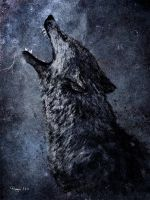 The Wolf by Roma2011
