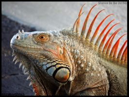 Iguana profile by AzureHowlShilach