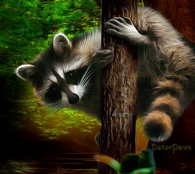 Racoon by PeterPawn