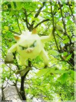 Mankey in the forest