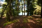 Forest 1 by CAStock