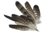 Hunters feathers stock by MorellAgrysis