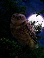 Owl in forest. by Aysha1994raven