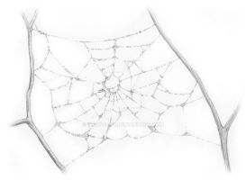 Spiderweb with Dew by Draw4life