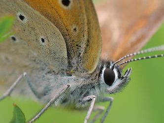 Butterfly close up by BogdanCh