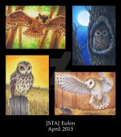 Owls - ATC - 2015 by Merinid-DE