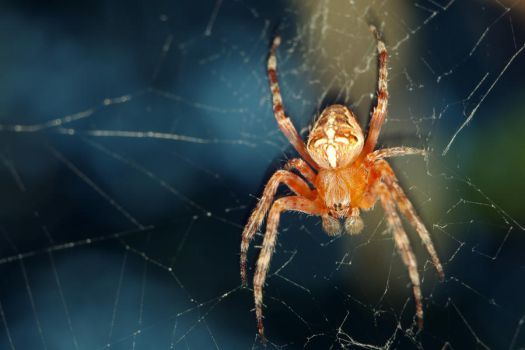 Spider by Syzygy001