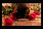 Bed of Roses by SweetMysterium