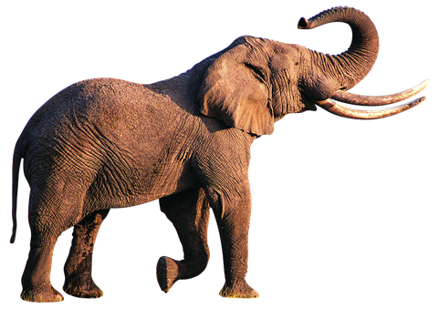 unrestricted hq elephant 3 by aio350