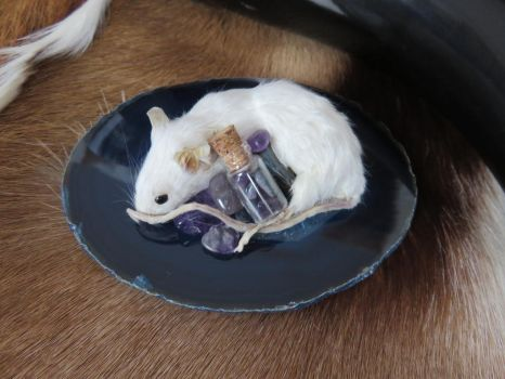 Taxidermy Mouse with Gemstones (SOLD) by Jewel-Wing