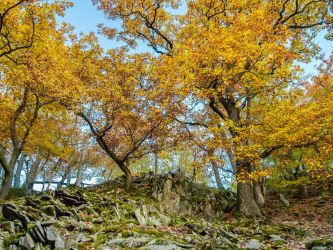 Yellow oaks, rocks of the Lindenberg at sunset by zeitspuren