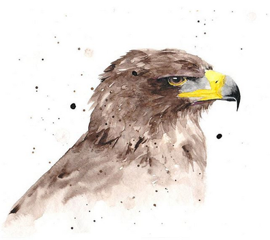 eagle watercolor by excentric