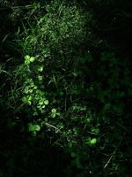 .clover.II. by witchlady750