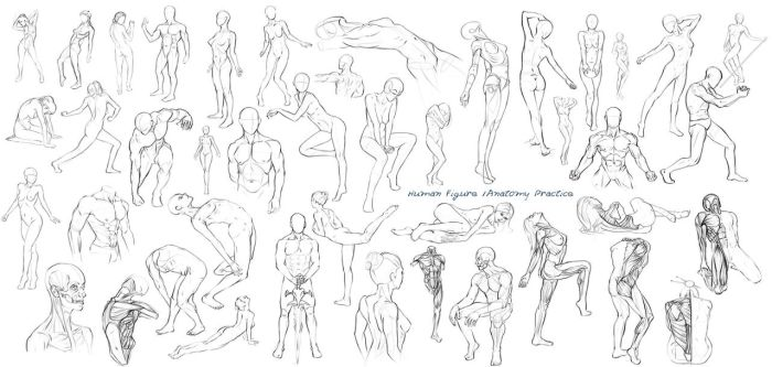 Figure / Anatomy drawings - week completed by Nixri