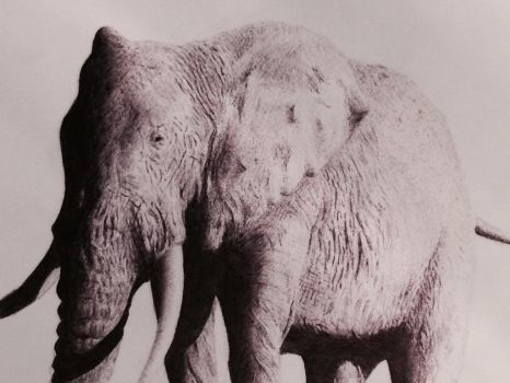Elephant  by Commint