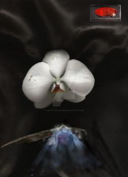 dying orchid- soul flight by Asp-in-the-Garden