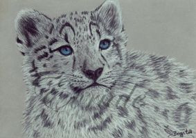 snow leopard cub by Evriale