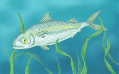 SketchThis: Fish by Sivia