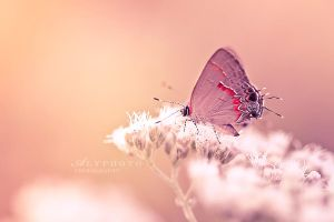 Float by Alyphoto
