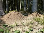 Twin Anthill 1 by HansBr