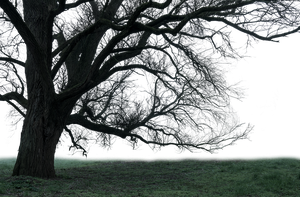 Mystical tree PNG by danieloooo