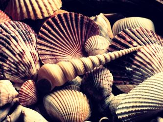 Shell. by Joey-2000