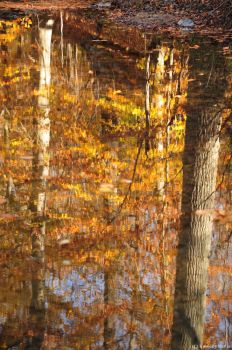 Autumn refection II by snaphappy101