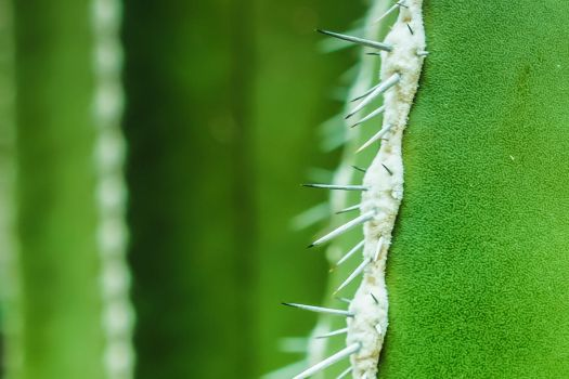 Mexican Fencepost Cactus - 93737 by kreativEVOLUTION