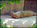 Leopard Snooze by RedPangolin