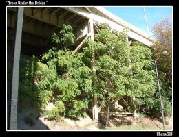 Trees Under the Bridge by shane613