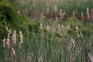 Marsh Bird by BlackRoomPhoto