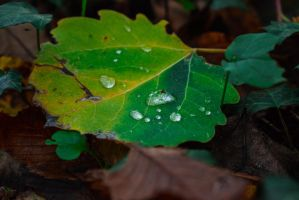 Droplets on leaf by matcheslv