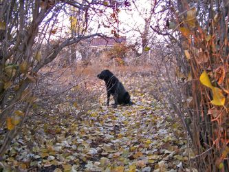 Shadow Dog in Autumn by Book-of-Light-Stock