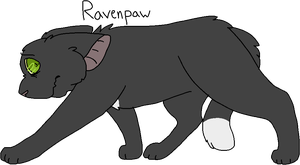 17 Ravenpaw (Remake) by Icedog-McMuffin