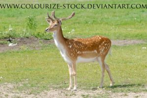 Deer Stock 2 by Colourize-Stock