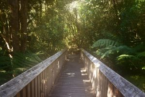 Bridge in the forest stock by CathleenTarawhiti