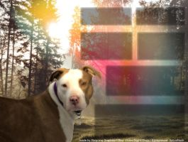 Pitbul Layout by Reigning-Graphics