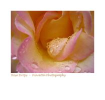 Rose Drops by webworm