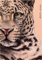 Half face of Leopard by elinkalo