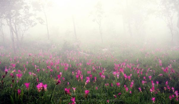 The Krajeaw Flower Field 2 by nicorobinhood