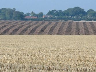 Field Patterns by moonhare77