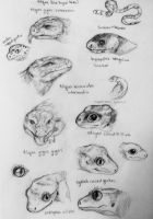 Reptile Sketch Page by OnyxUrocyon