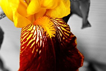 Flowing With Yellow by WallFlower72