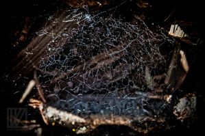 Spider Web . . . ? by kaioian