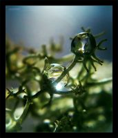 Dewdrops by ageofloss