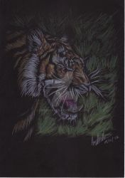 Tiger Drawing Art Trade by Emberguard