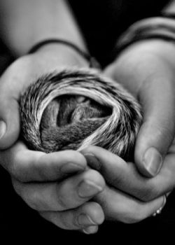 Baby Squirrel B+W by SilentDistractions