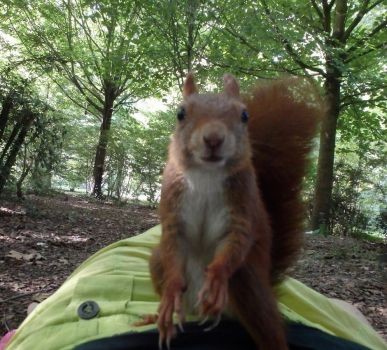 Gimme More! by Squirrels2poet2queen